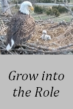 Grow into the Role